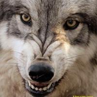 Фотография профиля Wolf Caucas ВКонтакте