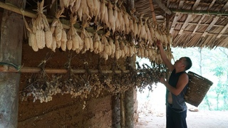This is how SERFDOM applied about 2,000 years ago: Harvesting corn+peanuts   Primitive Skills