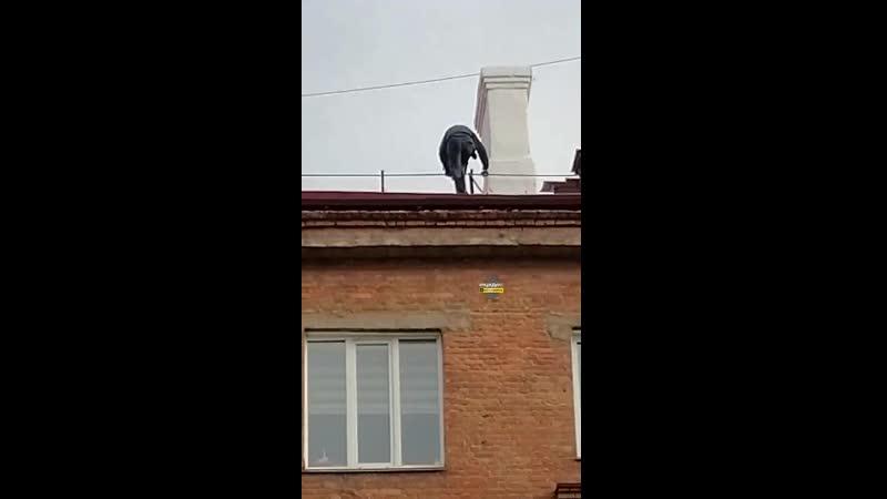 На Станиславского 7 моют крышу без страховки