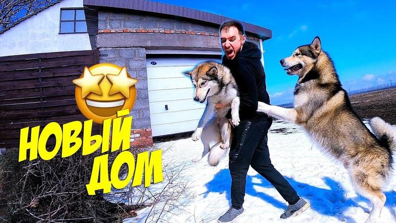 влог У НАС НОВЫЙ ДОМ! собаки переехали ХАСКИ СВОБОДЕН переезд в деревню