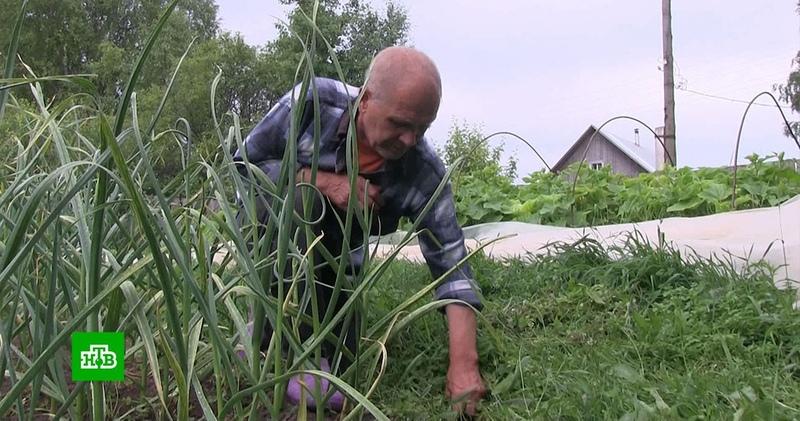 Житель Пермского края получил 3 года колонии за мак в огороде