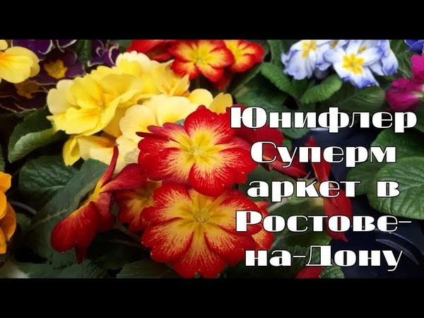 Супермаркет растений и цветов Обзор ассортимента комнатных цветов