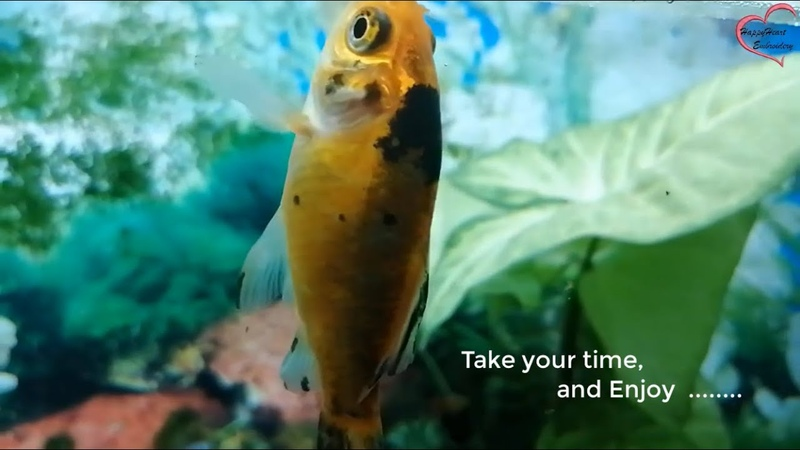 3 HOURS of Relaxing Aquarium Fish Tank Sounds, Bird singing and relax and the best baby music.