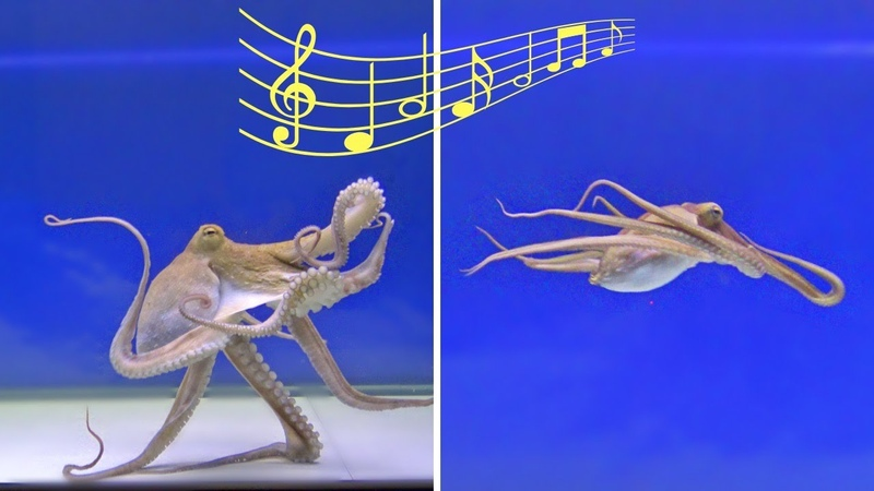Will an Octopus React to Music VIEWER REQUEST