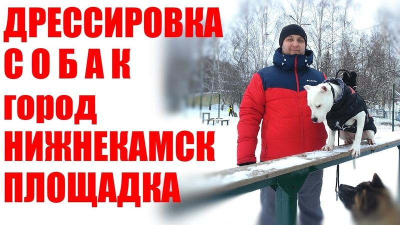 Дрессировка собак город Нижнекамск групповые занятия
