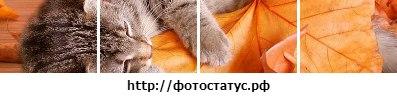 Оля Кучерук: Создано в приложении ФотоСтатус - http://vk.com/app2175066?from_id=1&loc=5222e65337fa8f9e160be3df#photostatus
