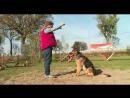 Дрессировка собак в городе Курск 14 05 2019