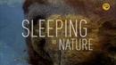 Сон в природе