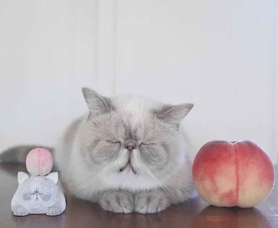 Я збагоен, как шладкий персик