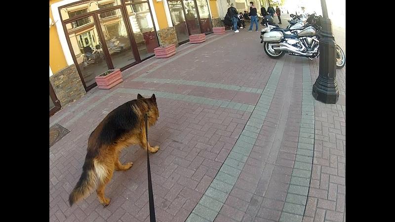 работа собаки по запаху поиск в городе