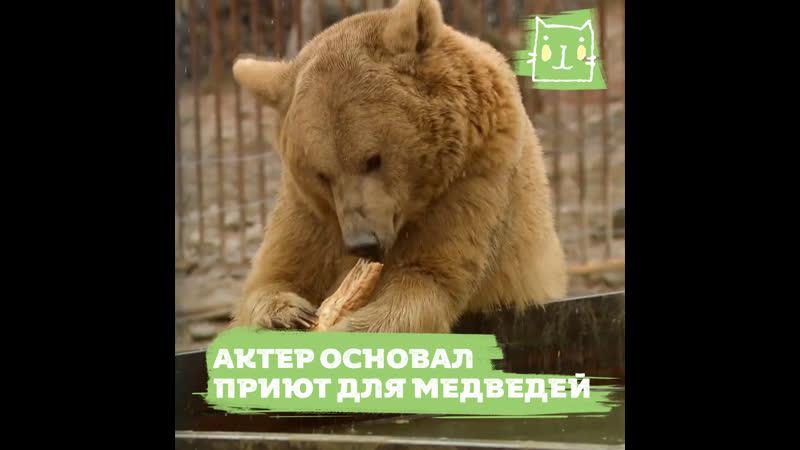 Грузинский актер основал приют где живут 15 медведей