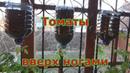 Выращивание помидоров вверх ногами или вниз головой. Необычный способ выращивания томатов